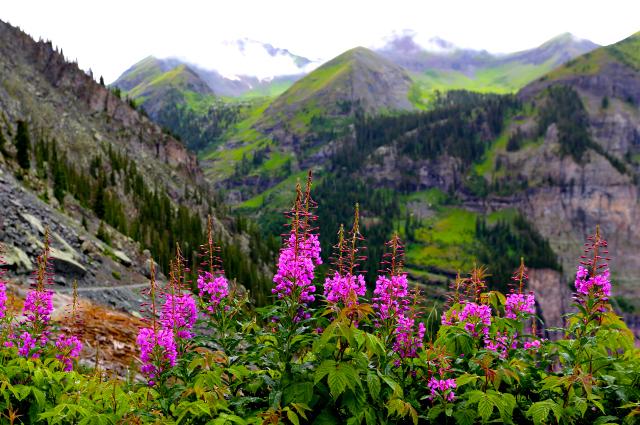 Mountain flower